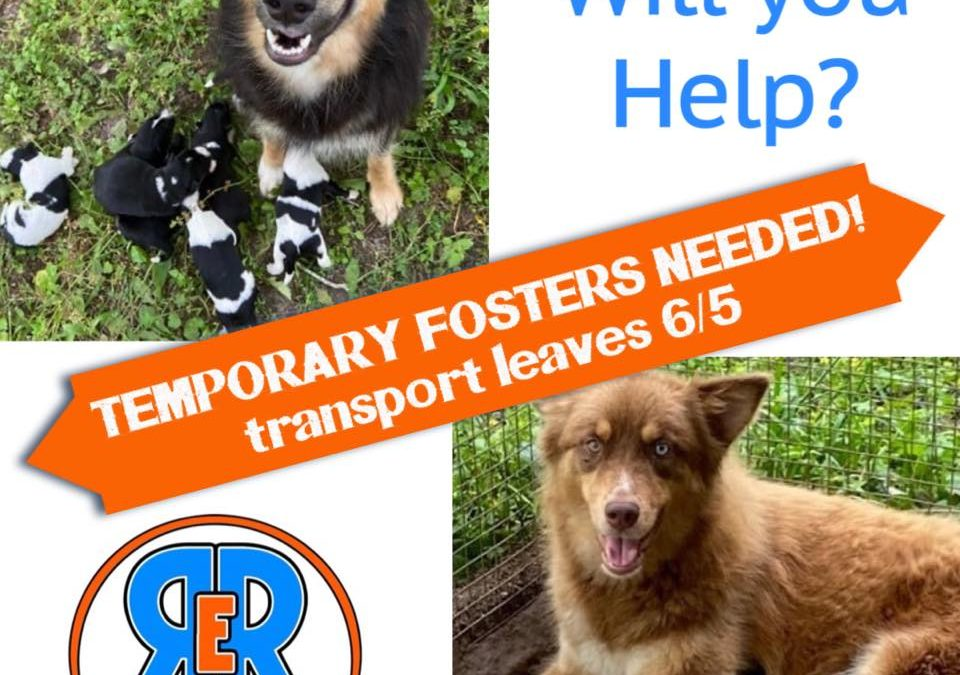 Temporary Fosters Needed